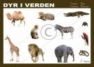 dyr i verden